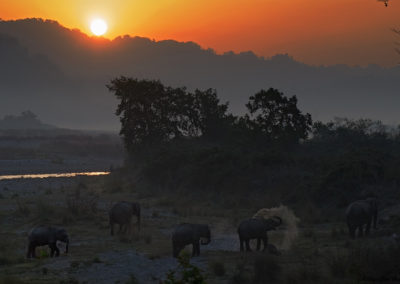 Morning in Corbett with Elephants